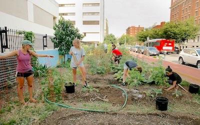 GWU Grow Garden